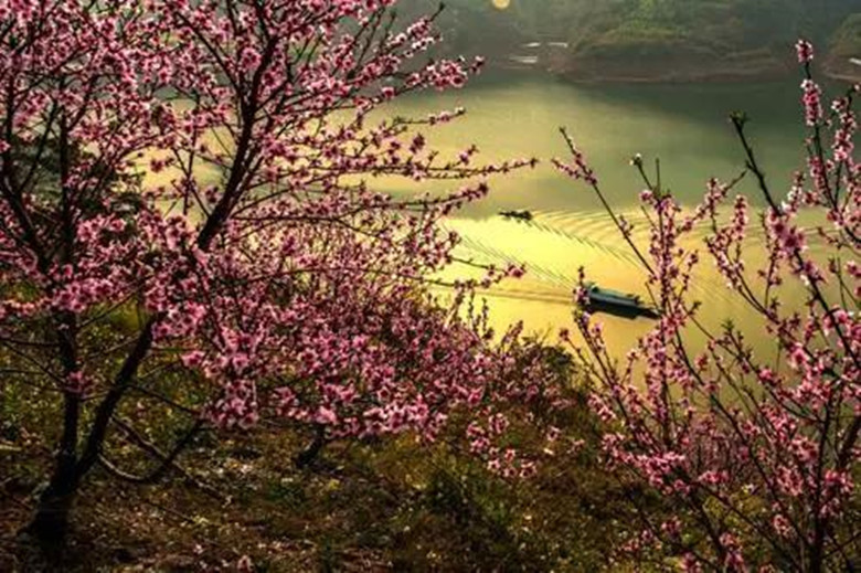 Map-of-Flower-Blossom-in-Chongqing-Travel-with-the-Map-3
