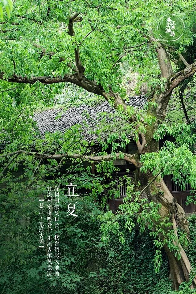 The-Beginning-of-Summer-Primitive-Time-in-Dongxi-Ancient-Town-4