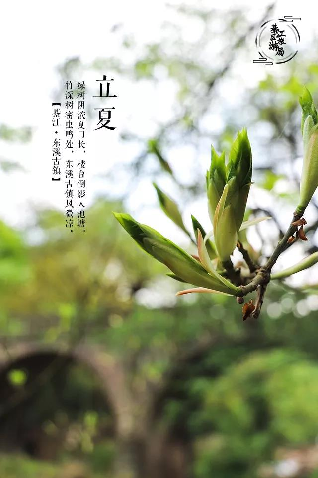 The-Beginning-of-Summer-Primitive-Time-in-Dongxi-Ancient-Town-9